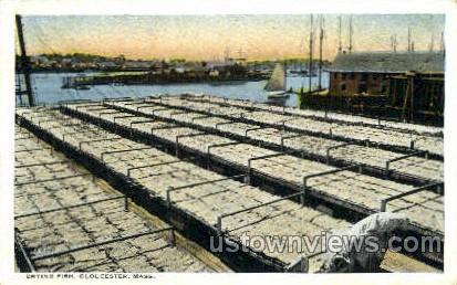 Drying Fish - Gloucester, Massachusetts MA Postcard