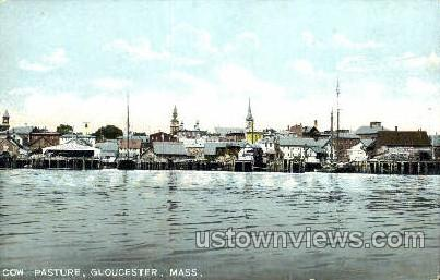 Cow Pasture - Gloucester, Massachusetts MA Postcard