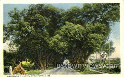 Annisquam Willows - Gloucester, Massachusetts MA Postcard