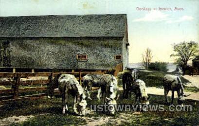 Donkeys - Ipswich, Massachusetts MA Postcard