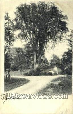 Smith Elm - Lenox, Massachusetts MA Postcard