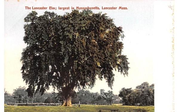 Lancaster Elm Massachusetts Postcard