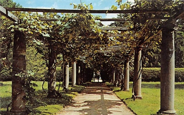 The Grape ArborLenox, Massachusetts Postcard
