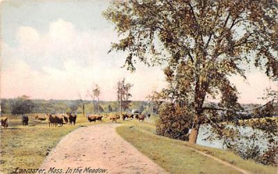 In The MeadowLancaster, Massachusetts Postcard