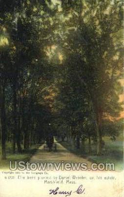 Elm Trees - Marshfield, Massachusetts MA Postcard