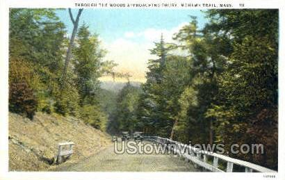 Throught the Woods - Mohawk Trail, Massachusetts MA Postcard