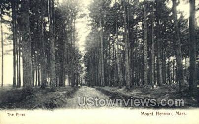 The Pines - Mt Hermon, Massachusetts MA Postcard