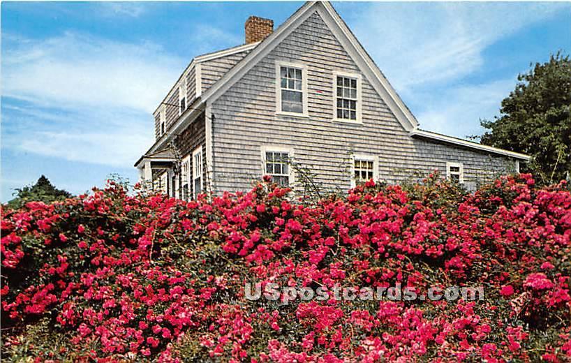 A Rosy Setting - Marthas Vineyard, Massachusetts MA Postcard