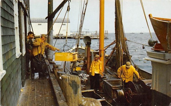 New England Coast Fisherman landing the catch Misc, Massachusetts Postcard