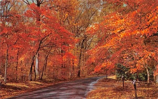 Autumn Leaves Misc, Massachusetts Postcard