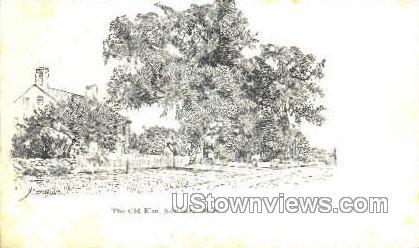The Old Elm - Newbury, Massachusetts MA Postcard