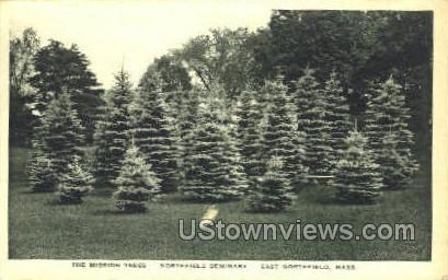 The Mission Trees - East Northfield, Massachusetts MA Postcard