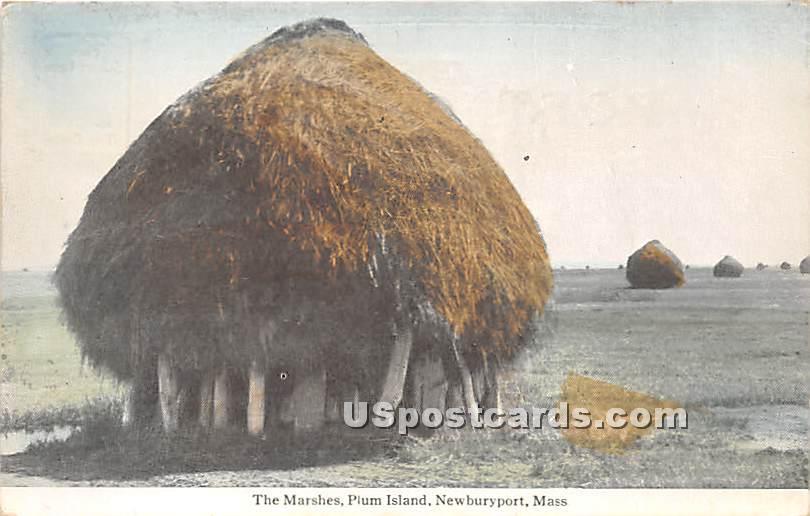 The Marshes on Plum Island - Newburyport, Massachusetts MA Postcard