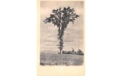 The Old Sentinel Tree North Orange, Massachusetts Postcard