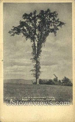 The Old Sentinel Tree - Orange, Massachusetts MA Postcard