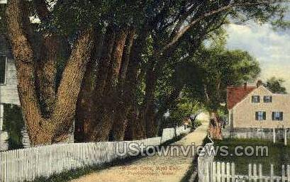 Willow Trees - Provincetown, Massachusetts MA Postcard
