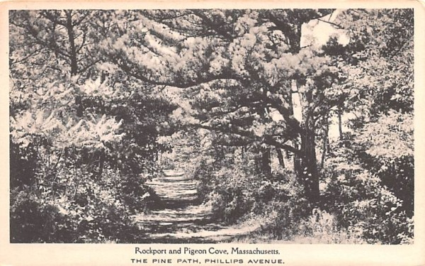 The Pine Path Pigeon Cove, Massachusetts Postcard