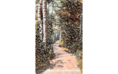 A shady Walk in Morton Pakr Plymouth, Massachusetts Postcard