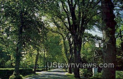 Elm Lined Village St - Cape Cod, Massachusetts MA Postcard