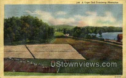 Cranberry Plantation - Cape Cod, Massachusetts MA Postcard