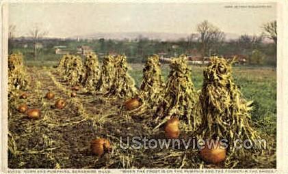 Corn & Pumpkins - Berkshire Hills, Massachusetts MA Postcard