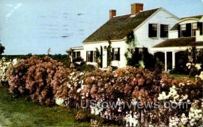 Rambler Roses - Cape Cod, Massachusetts MA Postcard