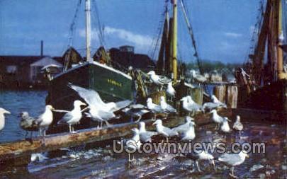 Seagulls, Fish Scraps - Cape Ann, Massachusetts MA Postcard