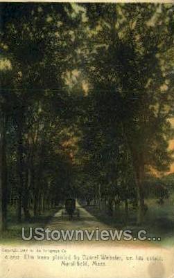 Elm Trees, Daniel Webster - Marshfield, Massachusetts MA Postcard