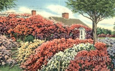 Rose Cottage - Chatham, Massachusetts MA Postcard