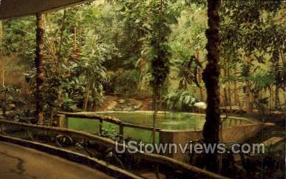Tropical Rain Forest Capron Park - Attleboro, Massachusetts MA Postcard