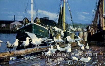 Seagulls - Rockport, Massachusetts MA Postcard