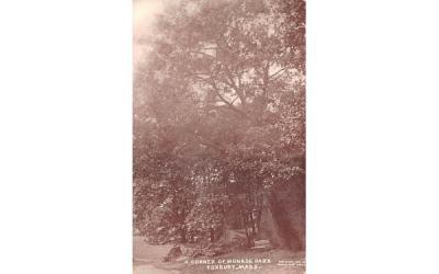 A Corner of Monroe Park Roxbury, Massachusetts Postcard