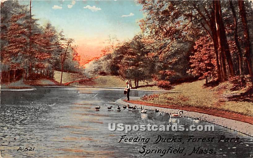 Feeding Ducks at Foret Park - Springfield, Massachusetts MA Postcard