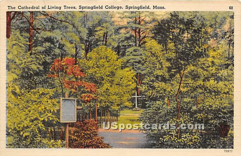 The Cathedral of Living Trees - Springfield, Massachusetts MA Postcard