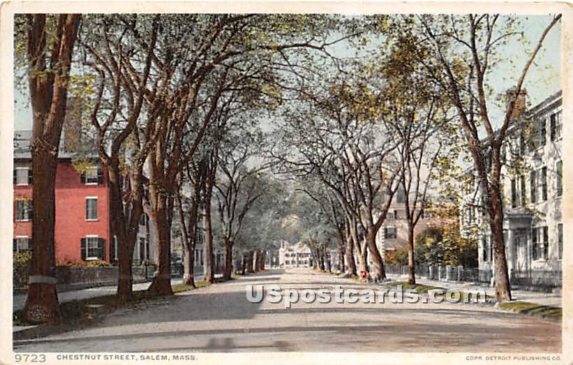 Chestnuet Street - Salem, Massachusetts MA Postcard
