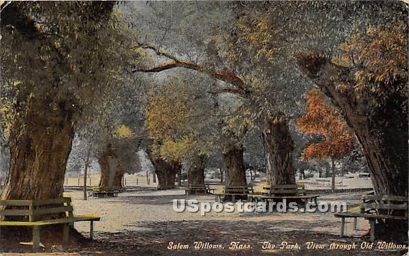 Salem Willows - Massachusetts MA Postcard