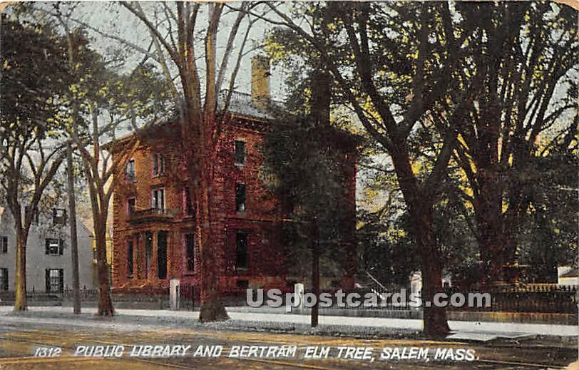 Public Library & Bertram Elm Tree - Salem, Massachusetts MA Postcard
