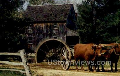 Yoke of Durham Oxen - Old Sturbridge Village, Massachusetts MA Postcard