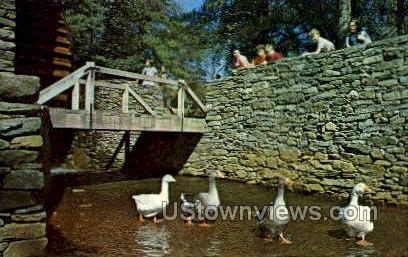 Village Geese - Sturbridge, Massachusetts MA Postcard
