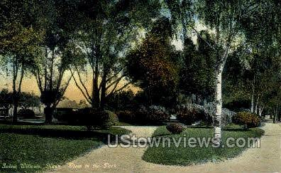 The Park - Salem Willows, Massachusetts MA Postcard