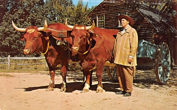 The Farmer with his Ox Cart & Oxen Sturbridge, Massachusetts Postcard