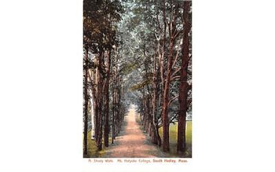 A Shady Walk South Hadley, Massachusetts Postcard