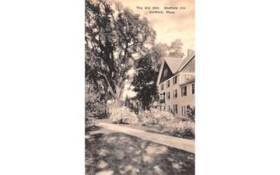 The Old Elm Sheffield, Massachusetts Postcard