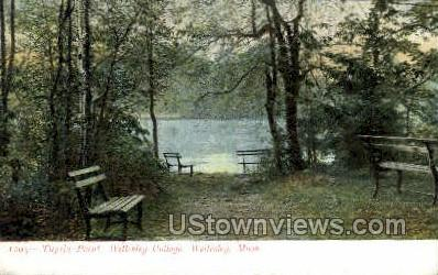 Tupelo Point, Wellesley College - Massachusetts MA Postcard