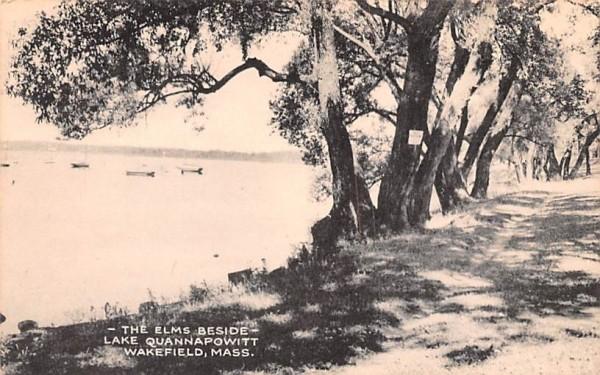 The Elms Beside Lake Quannapowitt Wakefield, Massachusetts Postcard