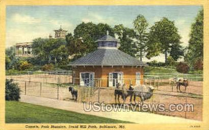 Druid Hill Park - Baltimore, Maryland MD Postcard