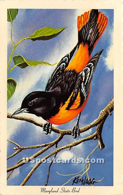 Baltimore Oriole - State Bird, Maryland MD Postcard