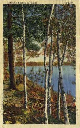 Lakeside Birches - Bangor, Maine ME Postcard