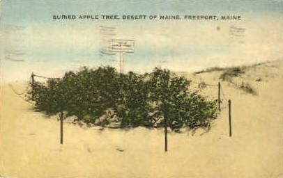 Apple Tree, Desert of Maine - Freeport Postcard