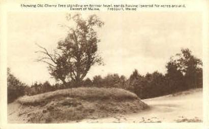 Cherry Tree, Desert of Maine - Freeport Postcard